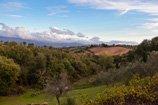 cinigiano-park-thumbnail