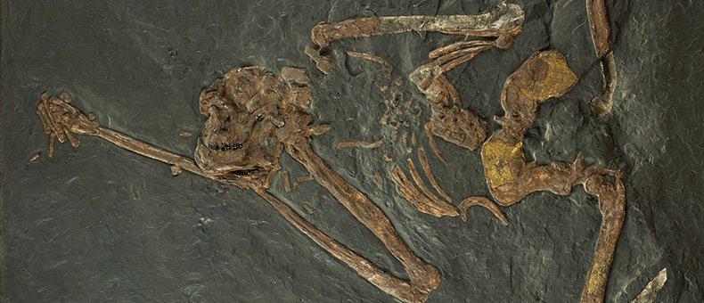 grosseto-museo-naturale