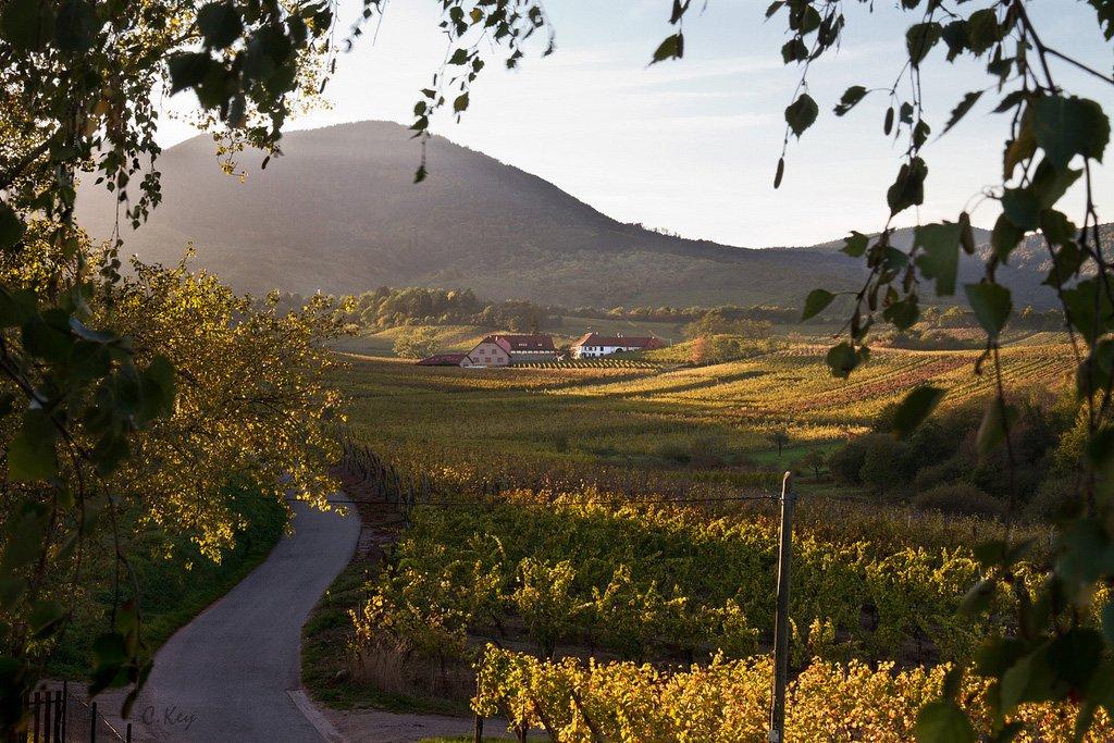 winery-maremma-tuscany-photo-collin-key