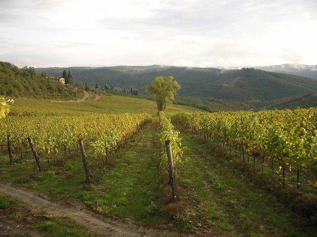 italian wines, tuscan wines, maremma, by dan taylor