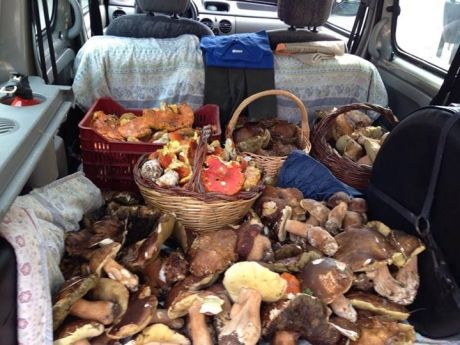 4porcini_mushrooms_maremma_tuscany_small